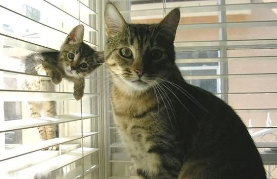 养幼猫还是养成猫好