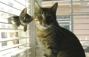 养猫心得:该从幼猫开始养吗?